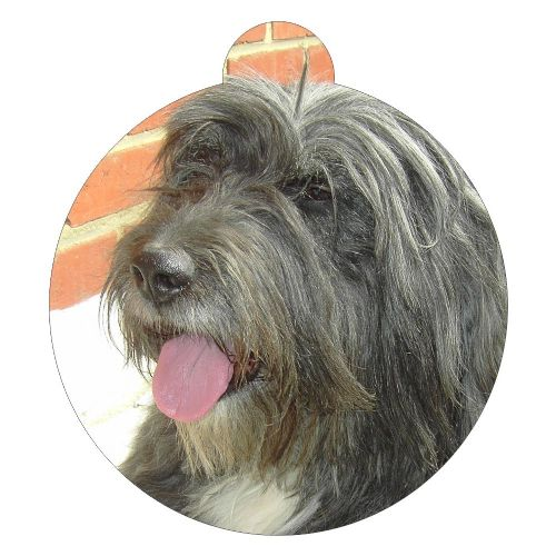 Bearded Collie Picture ID tag